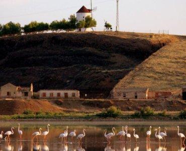 Laguna con flamencos - Almodóvar del Campo